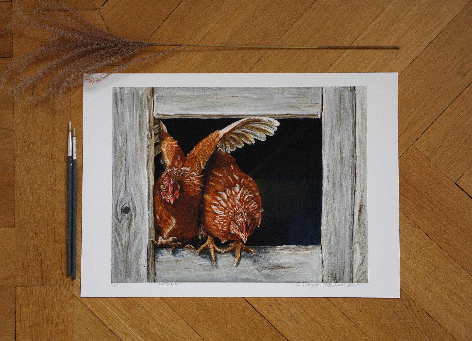The hens - Hönorna